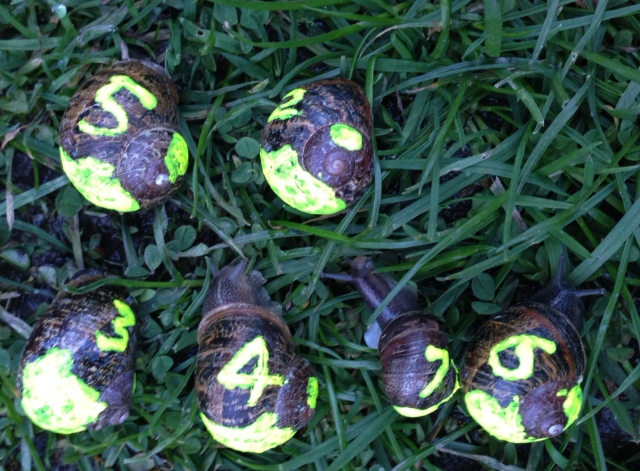 Zeplora fluoro snails IMG_0047_2