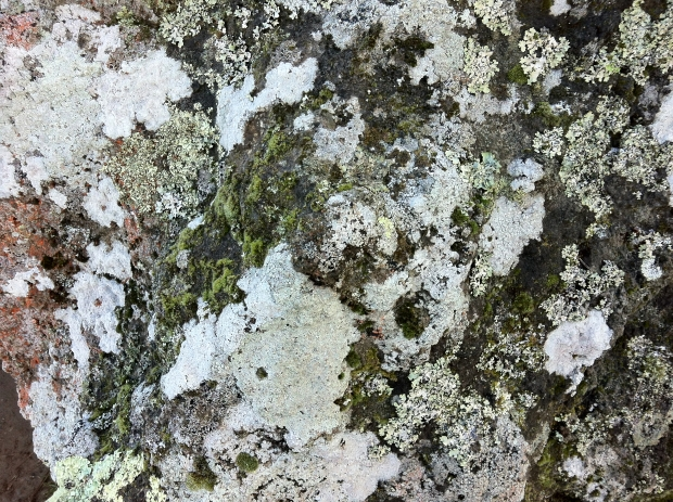 Lichens covering rocks