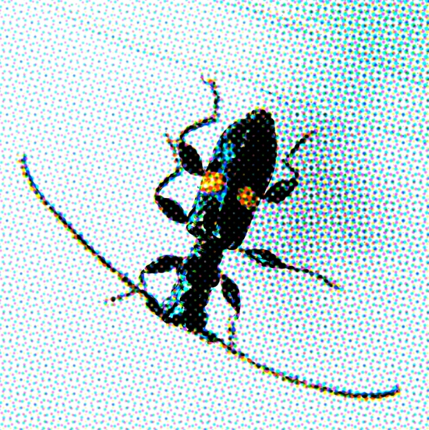 CMYK effect on a flower longhorn beetle