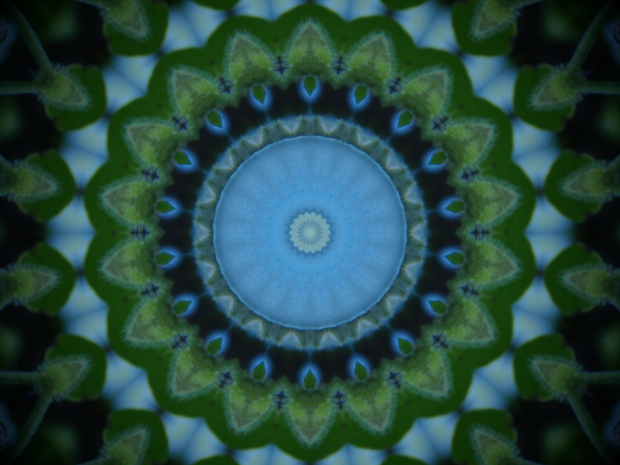 Mandala effect on a forget-me-not