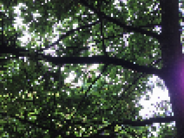 Pixelate effect on a tree - looks like minecraft