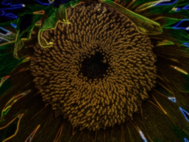 City lights effect on a sunflower