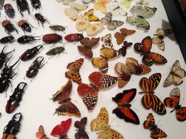 Lepidoptera and Coleoptera