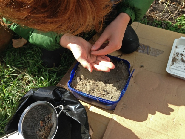 Extracting bones from soil and sand mix