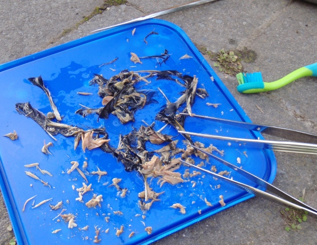 Extracting bird bones from the feathers and the meat