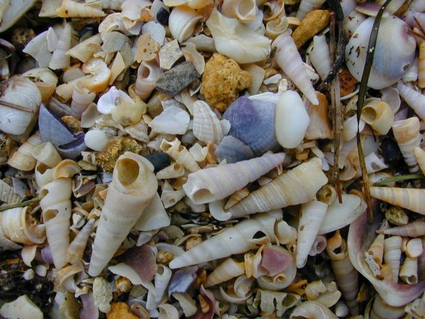 Shells (exoskeletons)